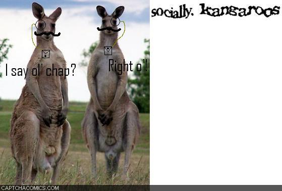 Socially Kangaroos