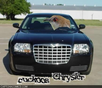 Cuckoos Chrysler